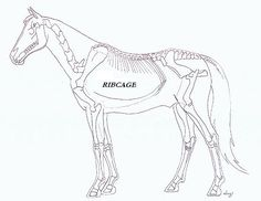 1000+ images about drawing horses 101: anatomy on