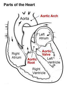 Oorreflexologie/oor massage: Het klinkt misschien vreemd
