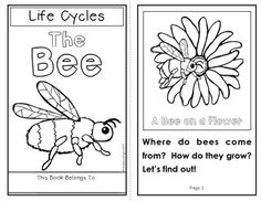 1000+ images about Life Cycle Science Ideas on Pinterest