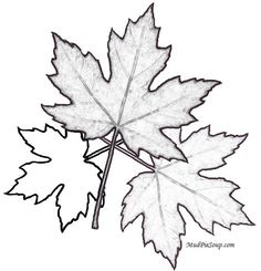 Large Autumn Maple Leaf Printable Adult Color Page.. Fall