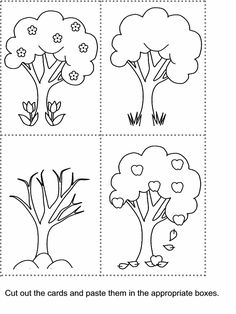 1000+ images about Tree unit on Pinterest