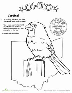 Bald eagle, Worksheets and Eagles on Pinterest