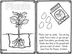 We, Plants and Parts of a plant on Pinterest