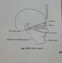 Articular Facet: Posterior Surface of malleus contains