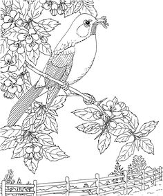1000+ images about Bird Coloring Pages on Pinterest