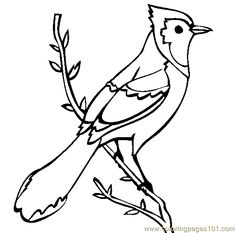 Hummingbirds, Coloring pages and Coloring on Pinterest