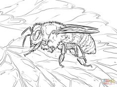 Here's a fun coloring sheet all about the BEES! :D Fun for