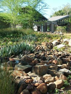 Indigenous South African Garden Google Search Garden Ideas