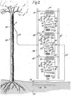 George O. Squier ~ Trees as Antennas ( Scientific American