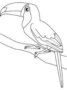 endangered rainforest touca 231x300 9 Most Endangered