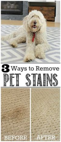 How to Get Dried Dog Urine Out of Carpet | Stains, How to ...