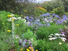 IMAGES INDIGENOUS SOUTH AFRICAN GARDENS Google Search Garden
