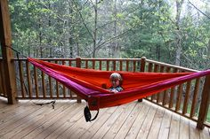 1000 images about your pics on Pinterest  Hammocks Nests and Eagles