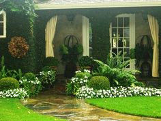 maintenance curb appeal - boxwood