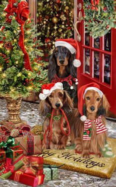 1000 Images About Longhaired Dachshunds On Pinterest