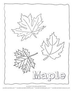 Pictures of Maple Leaves to Color Maple Leaf Coloring