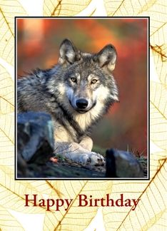 1000 Images About Wolves On Pinterest American Indians