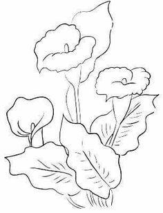 Calla Lilies Drawing Flowerart on pinterest water lilies