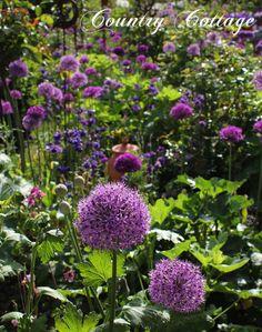 Vin E Deko Lasst Den Garten Charmanter Und Weiblicher Erscheinen Garten Pflanzen Pinterest Deko Vin E And Garten