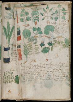 1000 Images About Voynich Manuscript On Pinterest