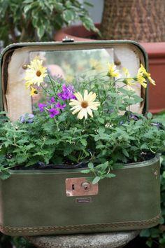 Garten Vin E Deko Alter Koffer Pflanzenbehalter