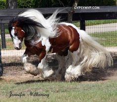 1000 images about Horses Gypsy Vanner on Pinterest