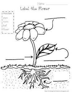1000+ images about Life Science- Plants on Pinterest
