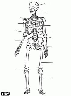 HEMA menselijk lichaam – online