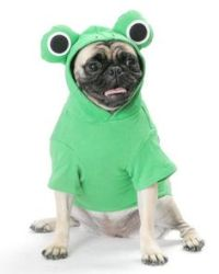 1000+ images about Ridiculous dog costumes on Pinterest ...