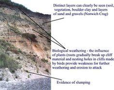 biological weathering diagram john deere lt166 wiring gcse landforms of coastal erosion: what are the erosion? how do headlands ...