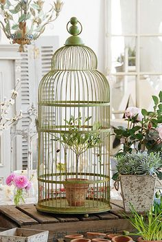Vintage Bird Cage Planter Birds Love This And Plant Hangers