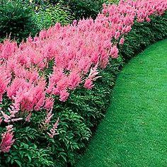 Perennial Garden Plants So Colorful So Wish It Was Mine