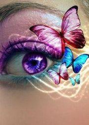 purple butterfly eye alexandria