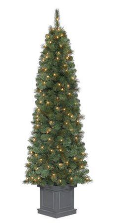 7 Prelit Douglas Fir Christmas Tree at Menards