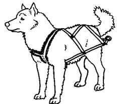 How to make a pulling harness for your dog. A bit of