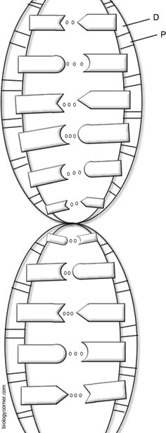 Free dna replication coloring pages