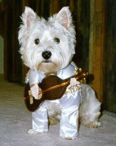 1000 Images About Westie Funny On Pinterest Westies