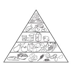 Learning about the USDA Food Pyramid, the Food Groups and