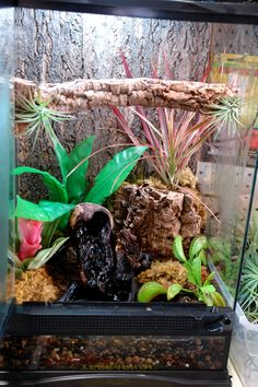 1000 Images About Frogs On Pinterest Vivarium Frog Terrarium And White Trees
