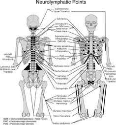 Diagram representing the Seven Gates of the human body