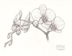 How to draw an orchid step by step. Drawing tutorials for