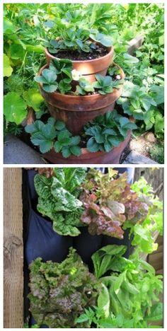Leftover Lattice Cucumber Trellis Gardening Pinterest