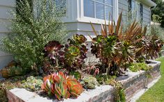 front yard succulent landscaping