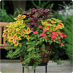 Container Gardening Planters Container Plants And Bacopa