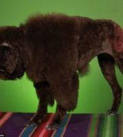 1000 ideas dog haircuts