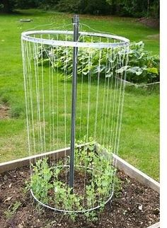 1000 Images About Allotment Ideas On Pinterest Tomato