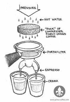 Espresso Recipe Ratios: A Field Guide For Caffeine Addicts