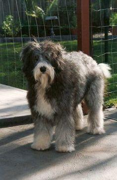 1000 images about Smithfield on Pinterest  Dog photos