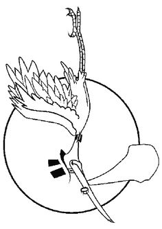 Dessin à colorier d'une cigogne portant le petit bébé de