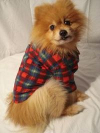 flannel on Pinterest | Flannels, Plaid and Hipster Dog